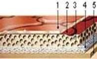 состав гетерогенного линолеума